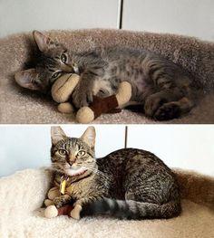 El antes y después de animales junto a su juguete favorito