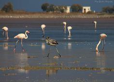 Alykes salt lake in the Autumn Winter Is Coming, Kos, Greece, Salt, Autumn, Island, Nature, Photography, Animals