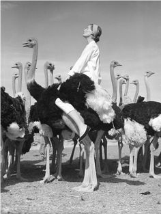 Nancy refused to admit that she hadn't read the fine print on the brochure advertising her dude ranch vacation. [Vogue, 1951. Photo: Norman Parkinson.]