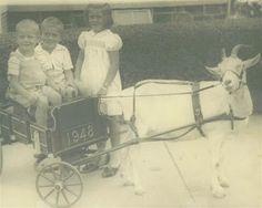 Nutfield Genealogy: Goat Cart Update