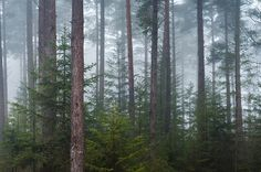 Misty Forest by uppy61, via Flickr