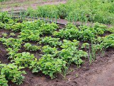 25 Brilliant Vegetable Garden Layout Ideas for Beginners - Garden and Happy Potager Bio, Potager Garden, Garden Soil, Garden Seeds, Herb Garden, Indoor Garden, Gardening Magazines, Gardening Books, Planting Vegetables