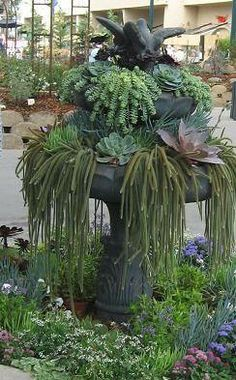 ABC das Suculentas: Fontes--love the succulent fountains! Succulents In Containers, Container Plants, Cacti And Succulents, Planting Succulents, Container Gardening, Planting Flowers, Dream Garden, Garden Art, Garden Design
