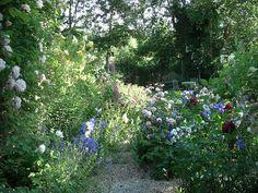 Roses and campanula Garden Design, Roses, Explore, Plants, Pink, Rose, Landscape Designs, Plant, Planets