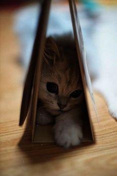 I think I need a kitten...