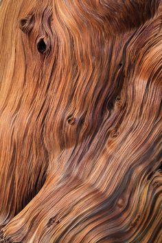 Bristlecone Pine wood by Lee Rentz on Flickr.