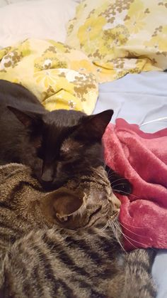 the black one is called Jamie, and the other one is her sister Sammy. Unfortunately Sammy ran away a few moonths ago :( I'm from Germany btw, have a nice day (submitted by -42nd-coldplayer)
