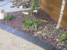 Black riven limestone setts pictured here when wet with Irish barley quartzite aggregate' plum slate' Scottish beach cobbles and silver grey granite plank paving. For further images and info of this garden at the Balmoral Show please visit our Private Places-Show Gardens Gallery.