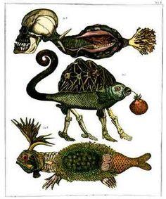 Natural History: Tab. 3; etching/aquatint by Jan Švankmajer.