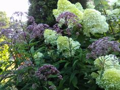 Another reader shows off favorite plants from the past year. This gardener took ample photos while her plants were at their peak so that we could also enjoy them. Limelight Hydrangea, Hydrangea Paniculata, Sun Garden, Shade Garden, Oriental Lily, Fine Gardening, Summer Plants, Weed Seeds, Tall Plants