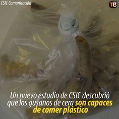 ❝ ¿Una nueva solución para luchar contra los residuos plásticos? ❞ ↪ Vía: Entretenimiento y Noticias de Tecnología en proZesa
