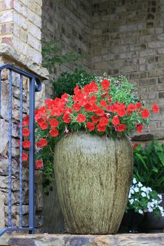 Planted large olive jar containers with a splash of red. So beautiful!!