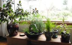 Indoor Mini Gardens | The Mini Garden Guru - Your Miniature Garden ...