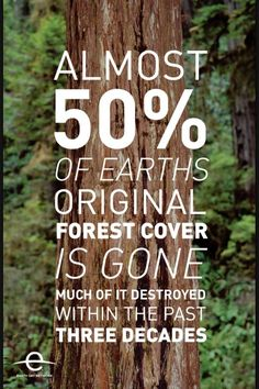 save the trees www.healingtheearth.yola.com to sign my save the trees petition click on the projcts page