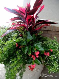 Looks like cordyline, dragonwing begonias, Swedish ivy and asparagus fern.  Lovely.