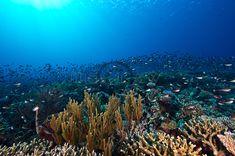 Hard Coral, Mountains, Nature, Travel, Naturaleza, Viajes, Destinations, Traveling, Trips