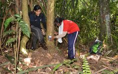 Geetha Annavi (R) and one of her students attach a camera trap to a tree in the North Selangor Peat Swamp Forest. Photo courtesy of Geetha Annavi