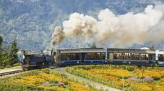 """A luxury train trip in India becomes a family adventure with the 8-hour ride on the Darjeeling Himalayan Railway """"toy train."""" This historic railway from 1881, now a UNESCO World Heritage Site, travels through the Eastern Himalayas to the lush, green Darjeeling tea plantations. The miniature steam train travels at the slow pace of 7 miles per hour, so you'll have time to take in all the spectacular scenery as you """"choo- choo"""" along."""