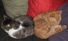 Which of Your Cats Quirks Is Your Favorite?Mine is ---> Deniable snuggling