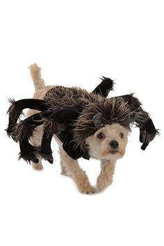 Princess Paradise Tarantula Dog Costume => New and awesome dog product awaits you, Read it now : Costumes for dog Pumpkin Halloween Costume, Pet Costumes, Dog Halloween, Halloween Costumes For Girls, Dalmatian Halloween, Halloween Unicorn, Couple Costumes, Halloween Shirt, Costume Ideas