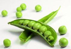 Sugar Snap Peas - BULK SEEDS - 1lb. 1500 Seeds