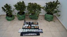 Pozzili coltivava marijuana sul terrazzo di casa: denunciato 40enne