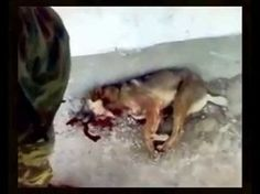Needs many more signatures Petition · RUSSIAN FEDERATION WE ASK TO STOP CRUEL SLAUGHTER OF HOMELESS ANIMALS · Change.org