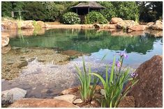 Recreation Large Ponds | Water Garden Designs Swimming Pool Pond, Natural Swimming Ponds, Diy Pond, Natural Ecosystem, Water Features, Garden Design, Nature, Rise Project, Mango Tree