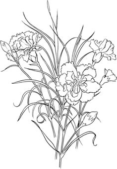 Click To See Printable Version Of Dianthus Caryophyllus Clove Pink Carnation Coloring Page