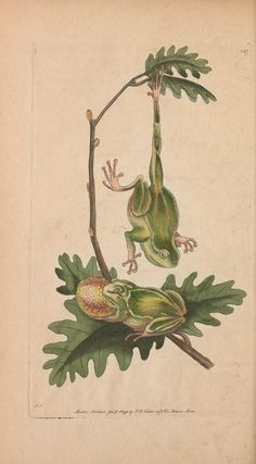 v.4 - The naturalist's miscellany, or Coloured figures of natural objects - Biodiversity Heritage Library