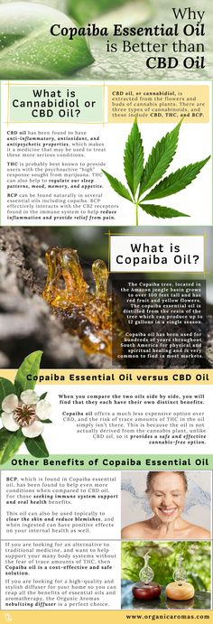 Why Copaiba Essential Oil is Better than CBD Oil - Essential Oils Copaiba Essential Oil, Essential Oil Uses, Natural Essential Oils, Essential Oil Diffuser, What Is Essential Oil, Copaiba Oil Uses, Healing Oils, Aromatherapy Oils, Young Living Oils
