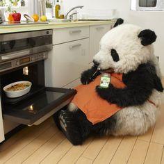 'Epic Panda with hammer' by Rhoar Teddy Bear Cartoon, Cartoon Panda, Panda Meme, Panda Wallpapers, Cute Cartoon Wallpapers, Animals And Pets, Baby Animals, Cool Panda, Baby Panda Bears