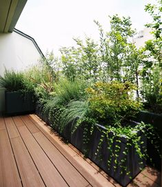 Discover recipes, home ideas, style inspiration and other ideas to try. Balcony Herb Gardens, Apartment Balcony Garden, Balcony Planters, Rooftop Garden, Outdoor Gardens, Rooftop Design, Terrace Design, Interior Garden, Interior Exterior