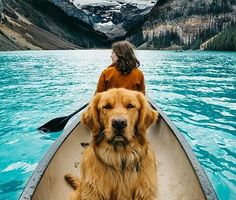Travelling with my dog