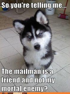 advice animals memes - Skeptical Newborn Puppy