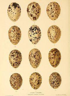 vintage speckled eggs print