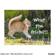 Badass Cats - What the frick? Postcard