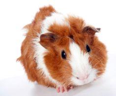 Animal-Friendly Shopping Tips #BeCrueltyFree