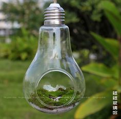 Transparent-Clear-Light-Bulb-Terrarium-Hanging-font-b-Glass-b-font-font-b-Plant-b-font.jpg (750×743)