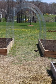 cattle panel trellis arches raised garden beds are ten feet long. I used two panels for each bed, leaving a gap in between. Cattle Panels x and Fence Staples cattle panel trellis arches raised garden beds are ten feet long. I used two pan… Cattle Panel Trellis, Cattle Panels, Cattle Panel Fence, Fence Panel, Trellis Panels, Building A Raised Garden, Raised Garden Beds, Raised Beds, Raised Gardens