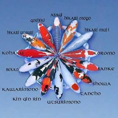 There are many different types of koi. Telling koi varieties apart can be confusing and sometimes even the experts argue about how to classify them. Koi Art, Fish Art, Pez Koi Tattoo, Fish Tattoos, Koi Fish Colors, Koi Pond Design, Landscape Design, Garden Design, Common Carp