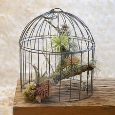 Bird Cage Aerium - this would be so easy to take care of!  Needs a nice bird on the branch, though.