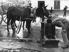 Fuente pública del Pasillo de Santo Domingo, con abrevadero para los animales de tiro. Málaga, años 50.