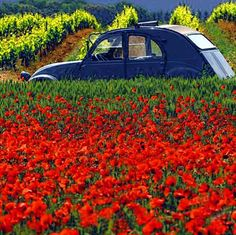 Poppies-and-2cv, Provence
