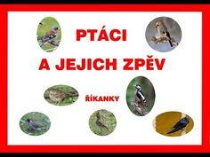 Ptáci a jejich zpěv - říkanky - pro děti - 2. část - YouTube