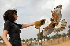 Reporter Mo Gannon was the first woman to take the falconry course with trainer Jannes Kruger at Banyan Tree Al Wadi Hotel.     http://www.thenational.ae/lifestyle/travel/how-to-train-a-falcon#