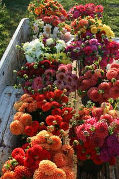 August Dahlia harvest by Erin Benzakein / Floret Flower Farm Colorful Roses, Bright Flowers, Deco Floral, Flower Farm, Flower Truck, Beautiful Gardens, Planting Flowers, Flower Arrangements, Floral Centerpieces