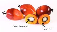 Is Palm Kernel Oil A Healthy Cooking Oil? There are two varieties of oils extracted from the palm plant. One is palm fruit oil which is reddish-orange in Palm Fruit Oil, Palm Oil, Healthy Oils, Healthy Cooking, Palm Plant, Weight Loss Blogs, Coconut Oil, Oil Production, Shelled