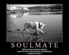 Soul Mate Symbol | Soul Mate Graphics Code | Soul Mate Comments & Pictures