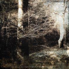 © Suus Suiker Fine Art & Photography #nature #flowers #fineartphotography #landscape #mixedmedia #coldwax #fotografía #fotografie #art🎨 #artista #worlds_eyes #modernart #digitalart #photographic #fineart #modernart #forest #tree #woods